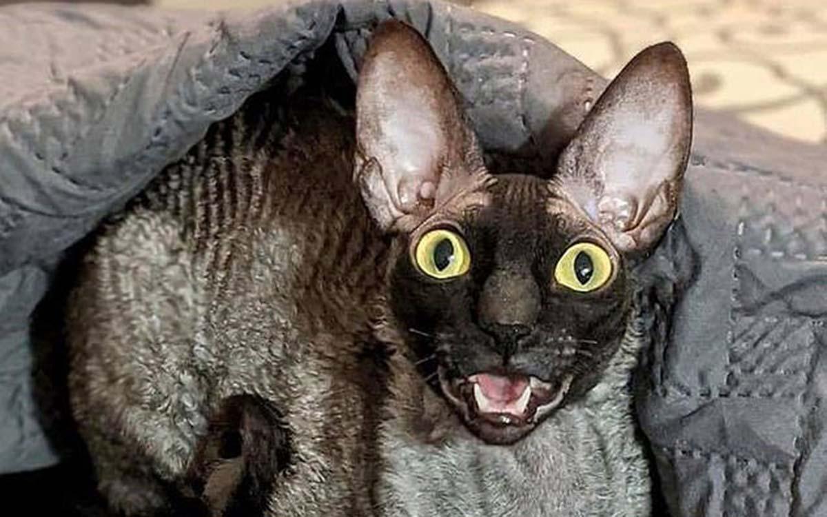 Meet-Pixel-the-Green-Bay-cat-so-creepy-that-even