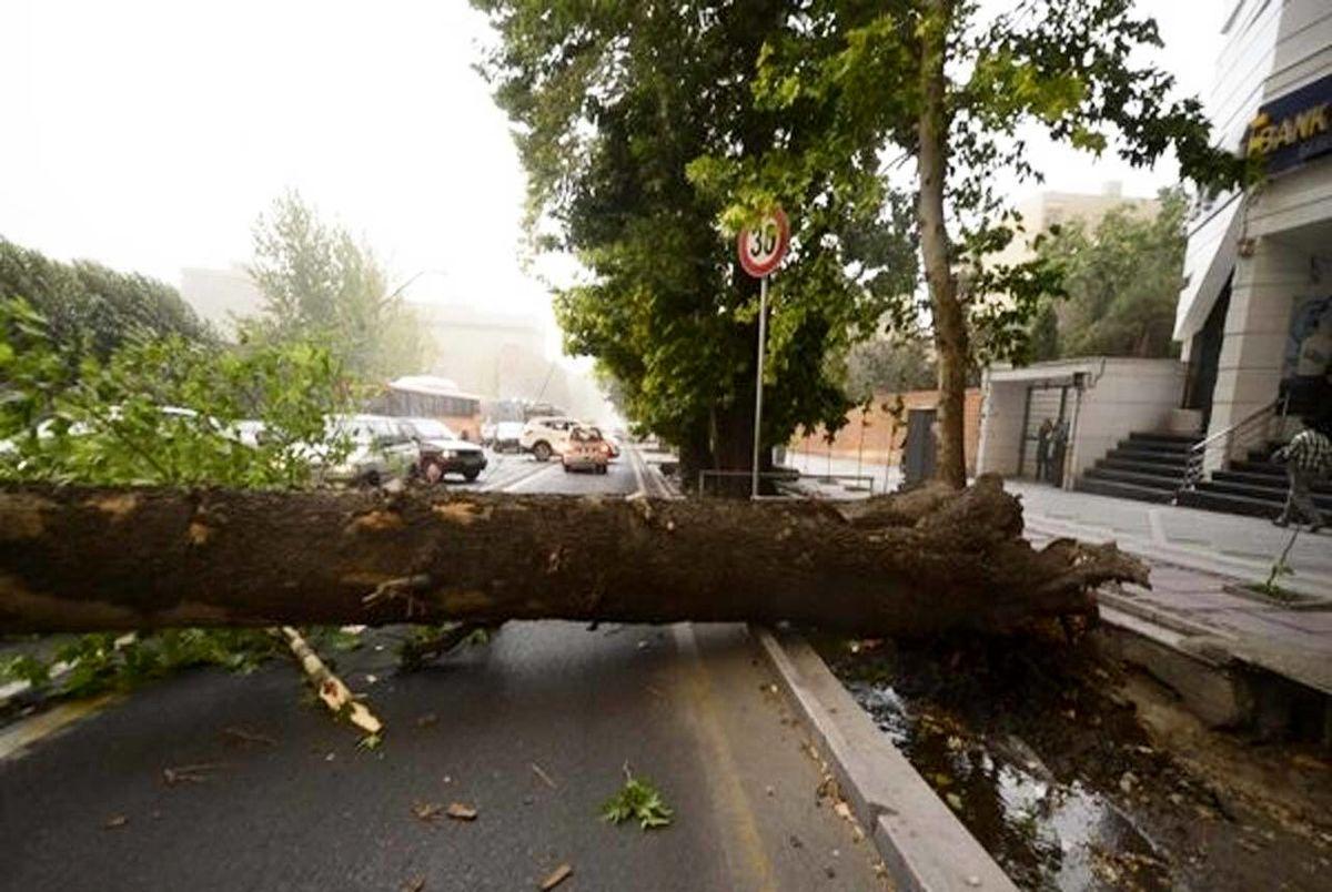 سقوط درخت در خیابان ولیعصر تهران روی خودروها + فیلم