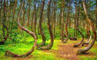 درختان عجیب و غریب اما واقعی در جهان!